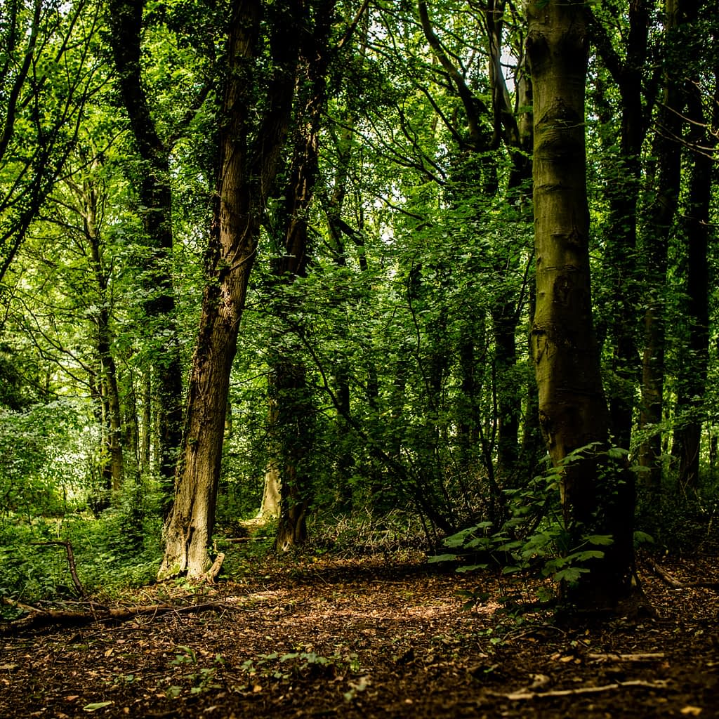 Catherine Tuckwell Personal Brand Photography eco-friendly photographer trees in Penshaw woods